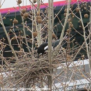 période nidification