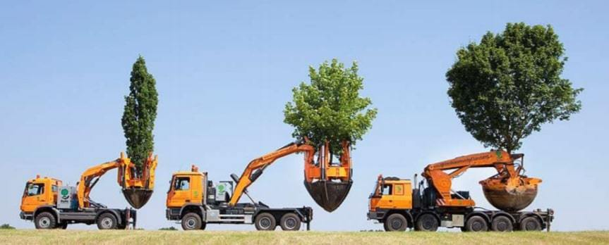 transport arbre