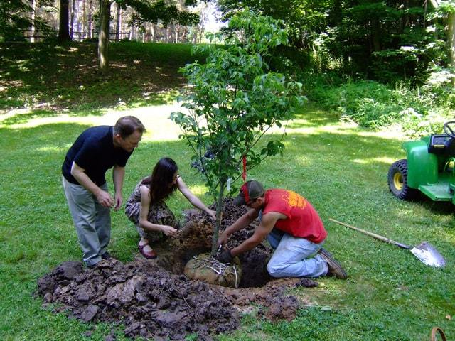 déraciner un arbre