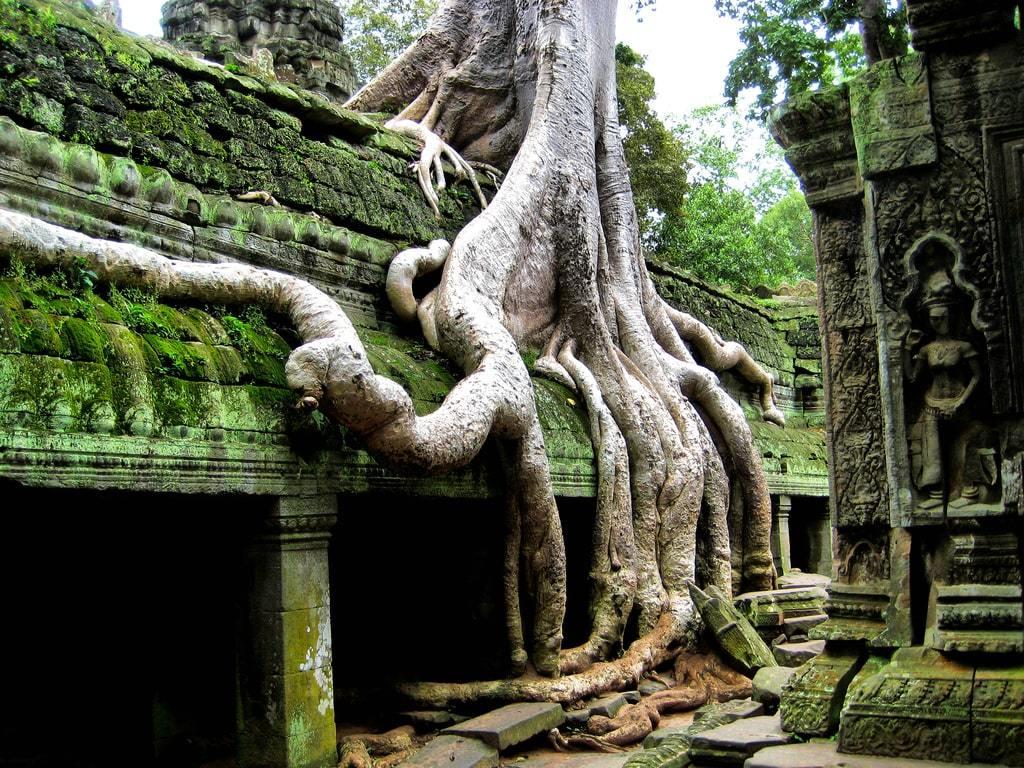 racines fondations