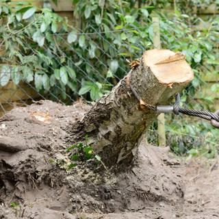 dessoucher petit arbre