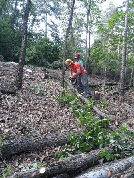débroussaillage forestier