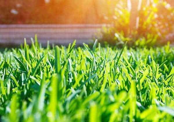tondre sa pelouse