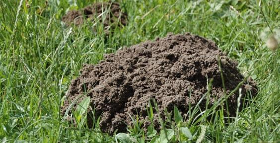 terre pelouse