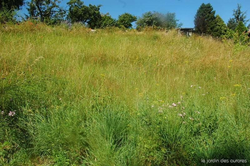 pelouse naturelle