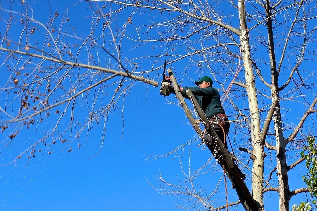regles elagage arbre