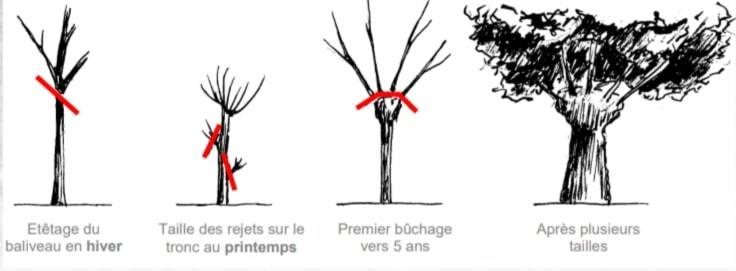 eteter arbre