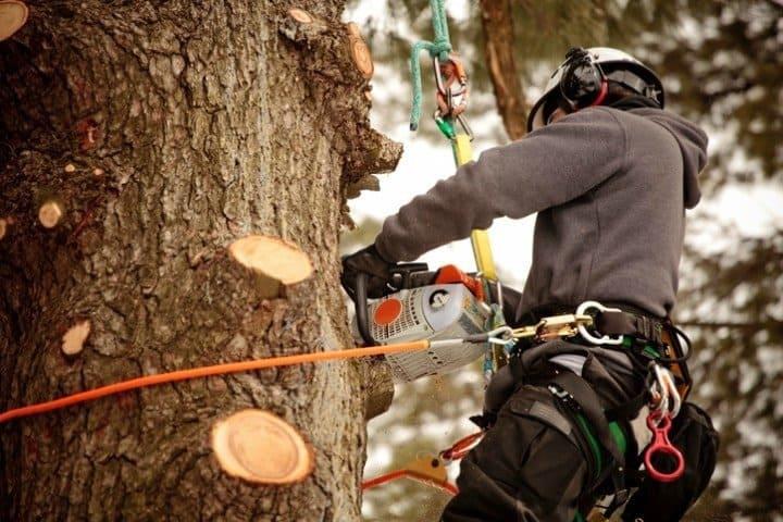 prix pour eteter un arbre