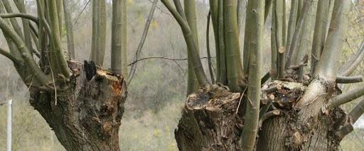 emonder un arbre