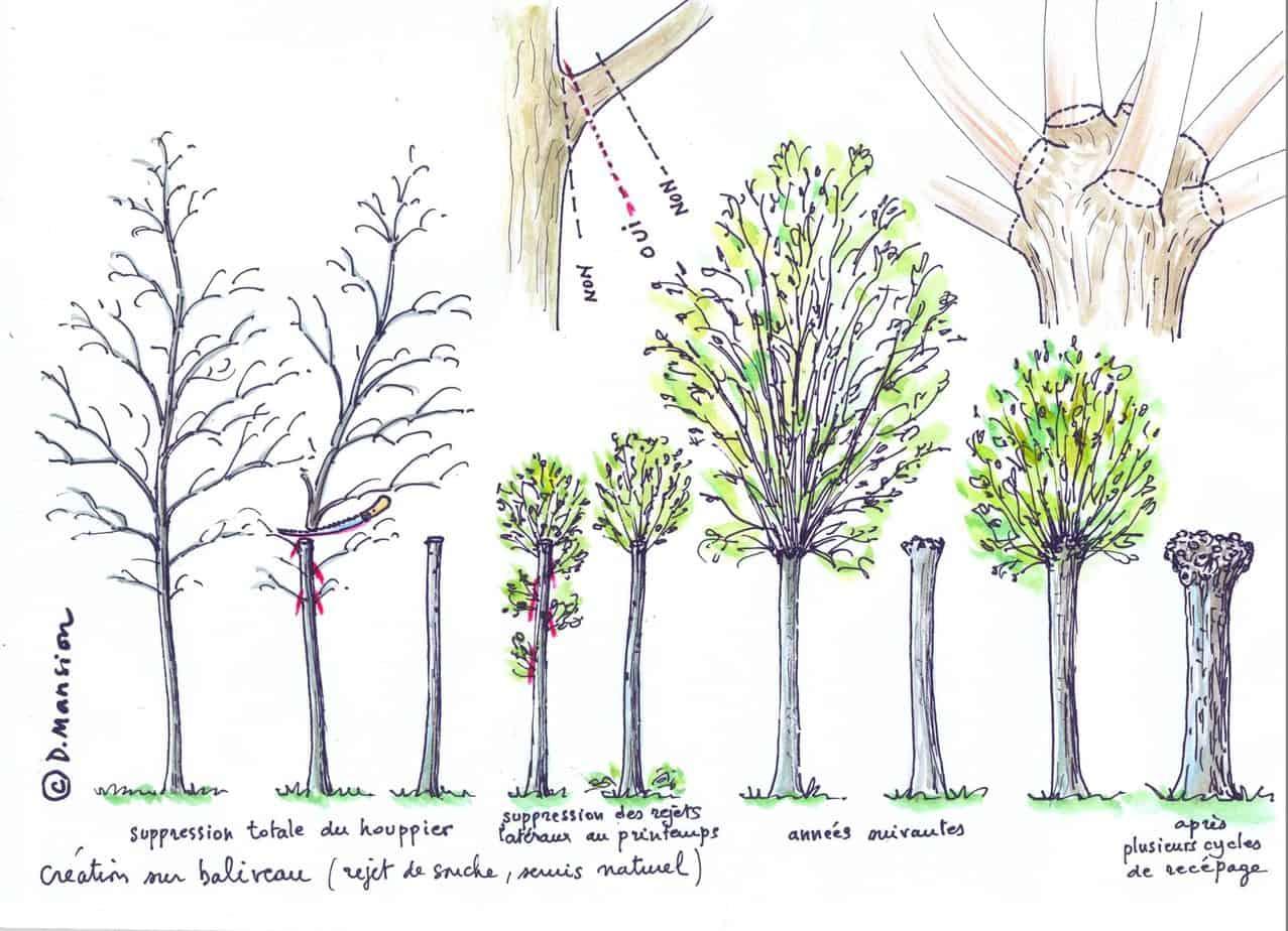 receper un arbre