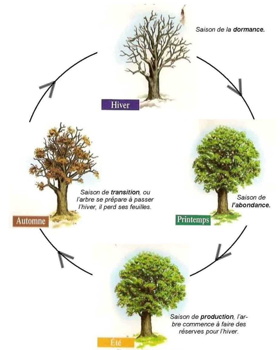 comment élaguer arbre