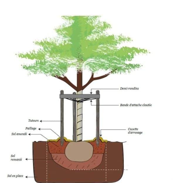 tuteur arbre