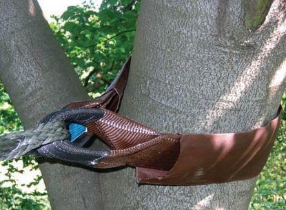 gaine haubanage arbre