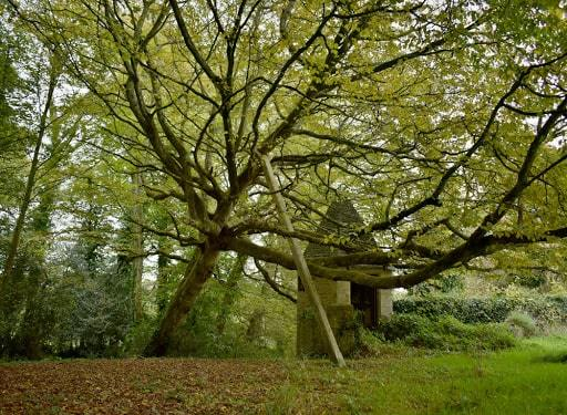 arbre qui penche