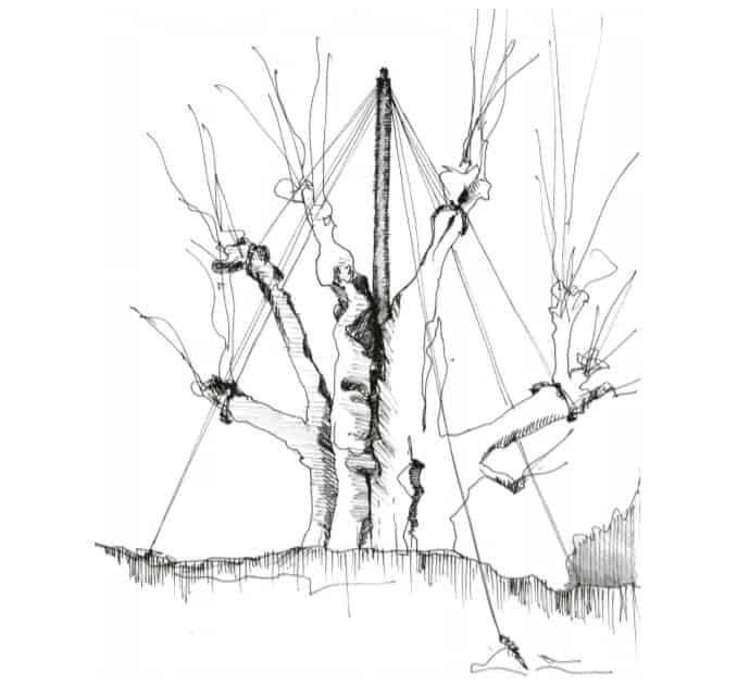 haubaner arbre (7)