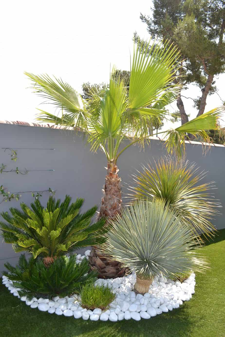 palmier piscine