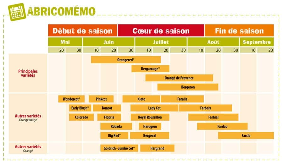 calendrier abricotier