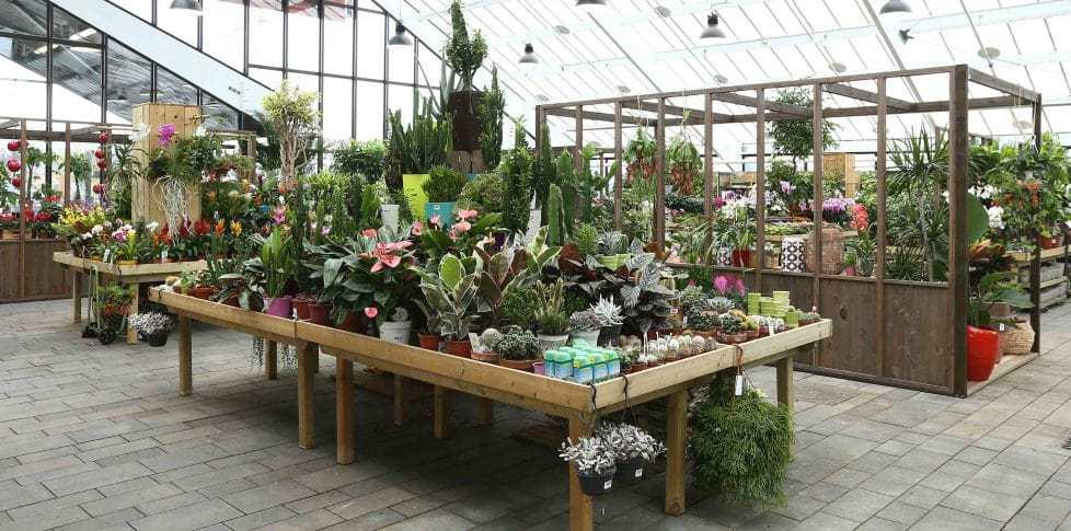 acheter arbre plante