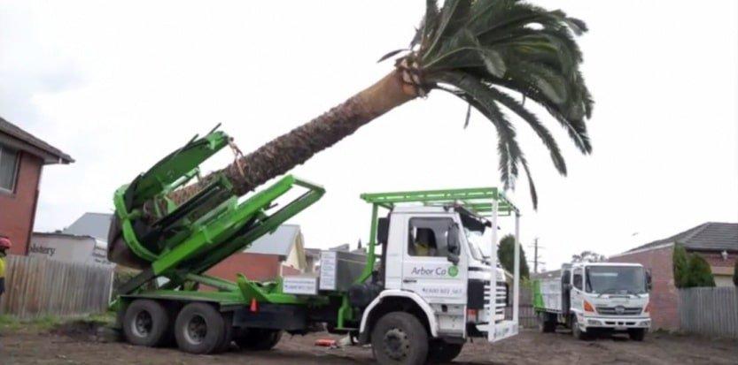 acheter arbre grande taille