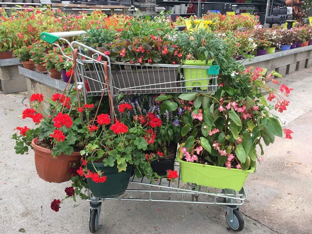 acheter en jardinerie