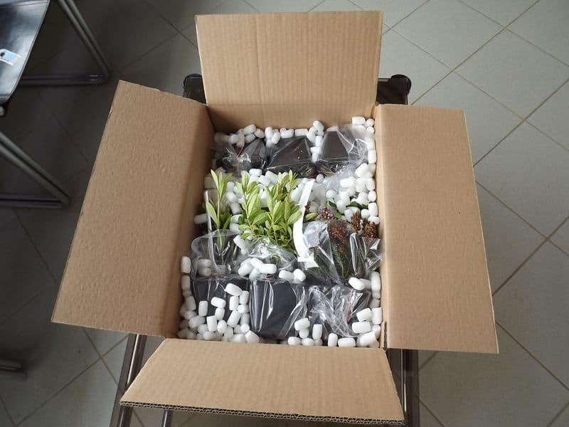 acheter plante en ligne
