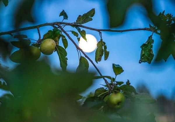 calendrier lune jardin