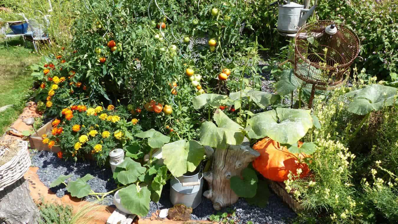 Plantes médicinales au jardin de curé
