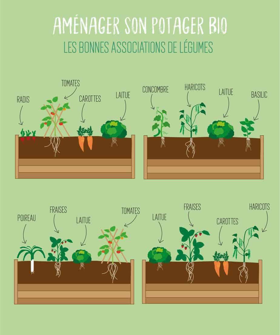 plantes jardin écologique