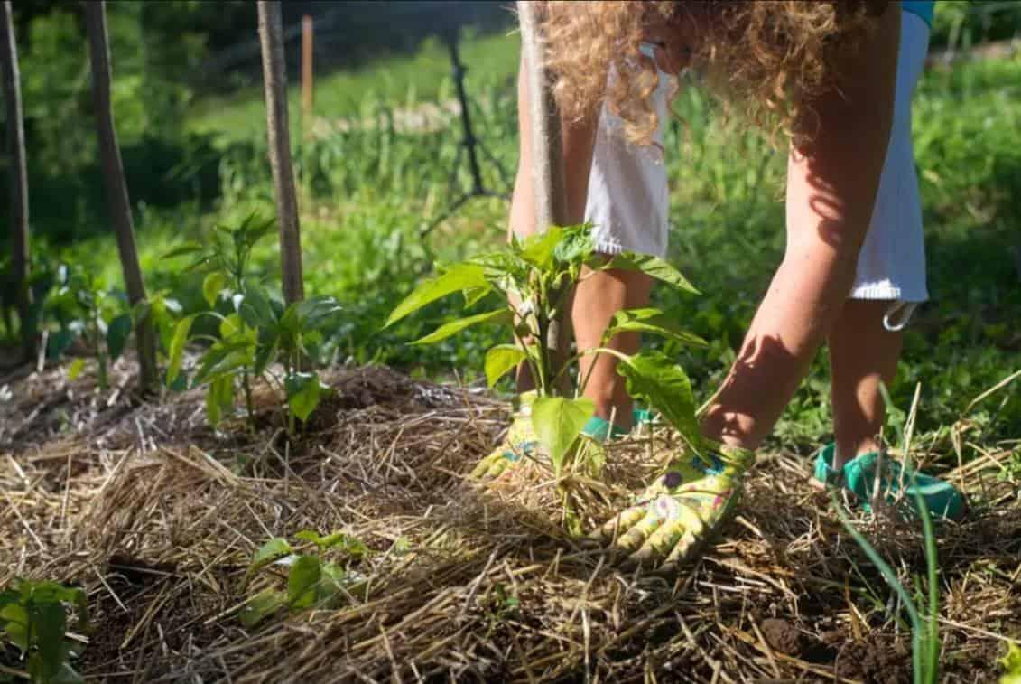 jardin ecologique permaculture