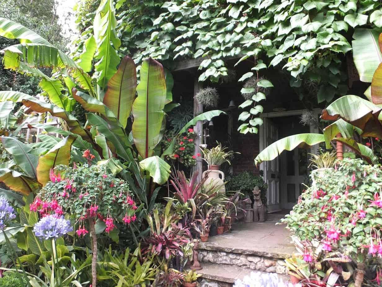 jardin exotique avec fleurs