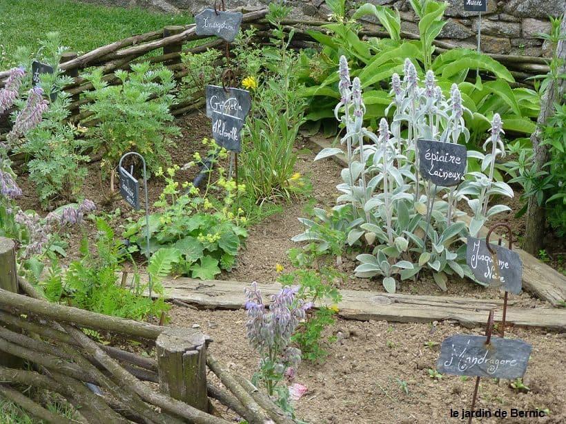 plantes jardin medieval