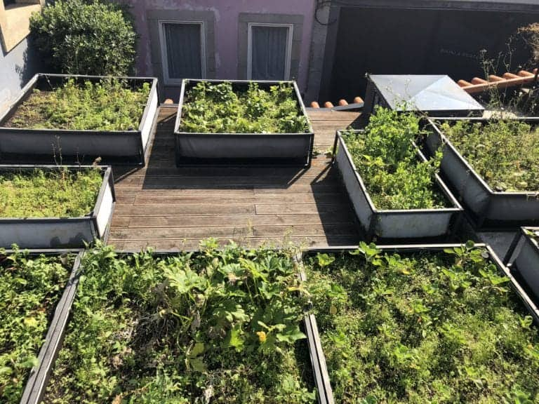 jardinage sur toit
