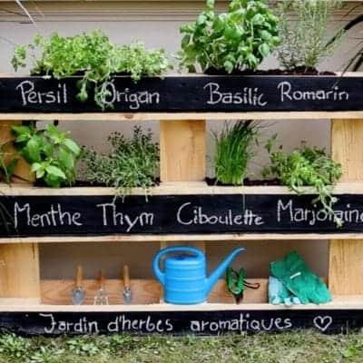 mur vegetal palette