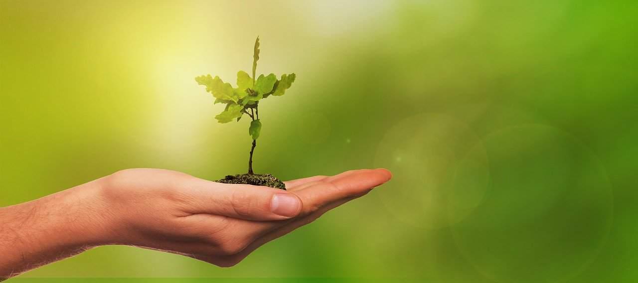 planter des arbres en france