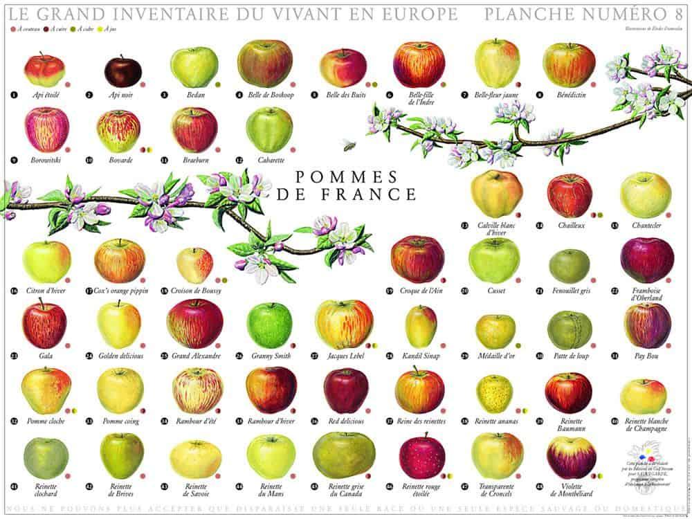 variétés de pommes