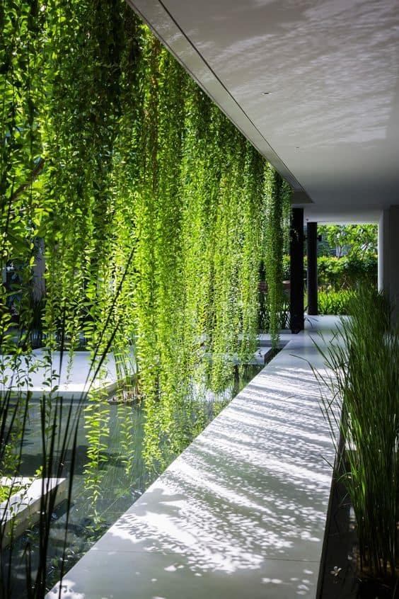 plantes de jardin contemporain