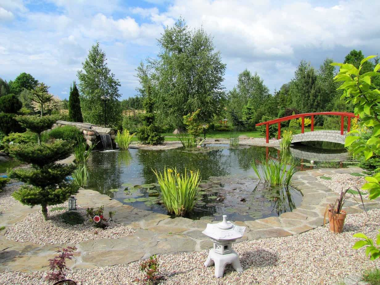 bassin jardin japonais