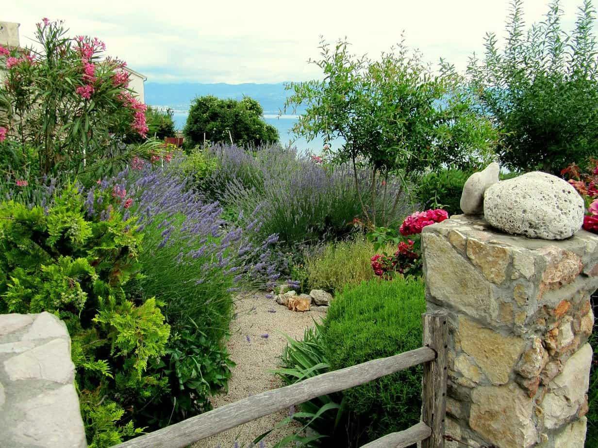 plantes jardin mediterraneen