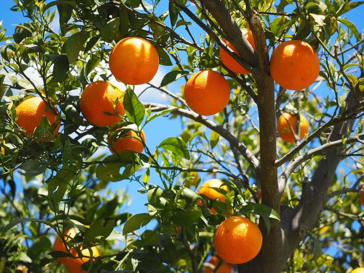 arbre jardin mediterraneen