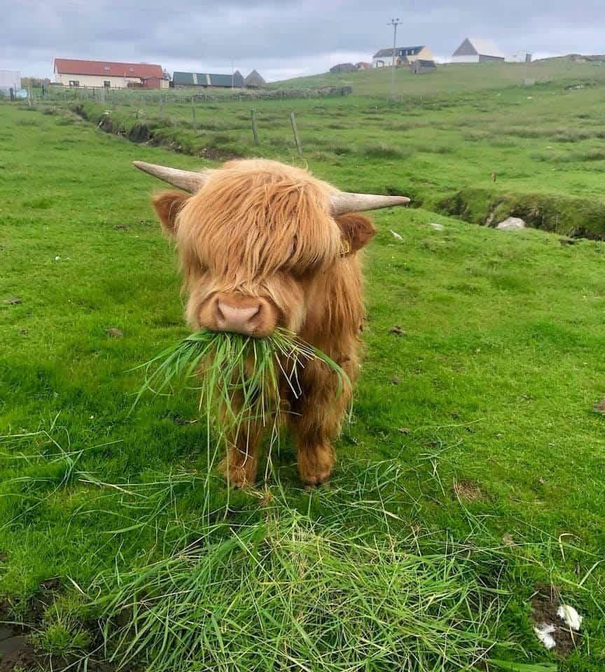 paturage ray grass