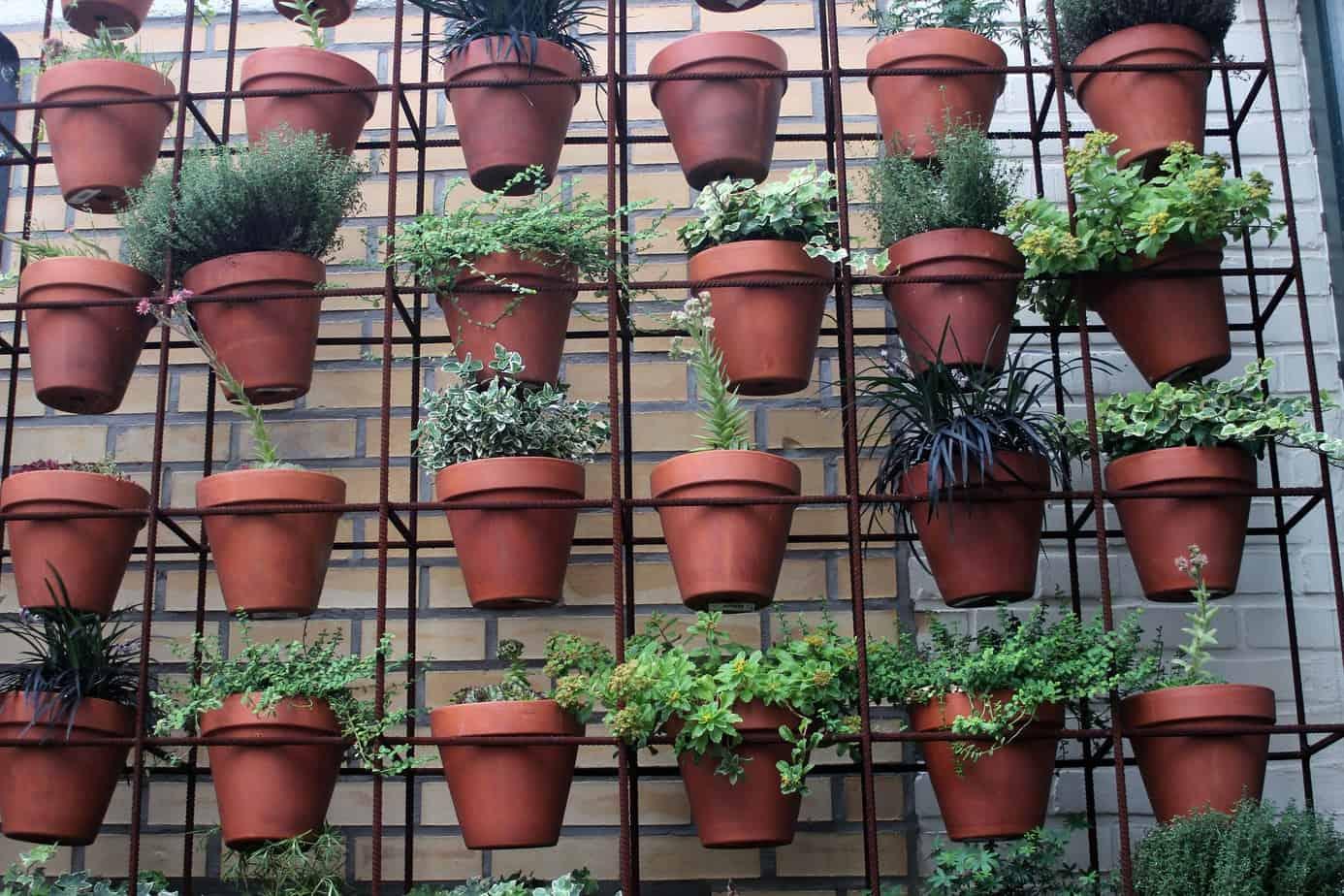 plantes micro jardin