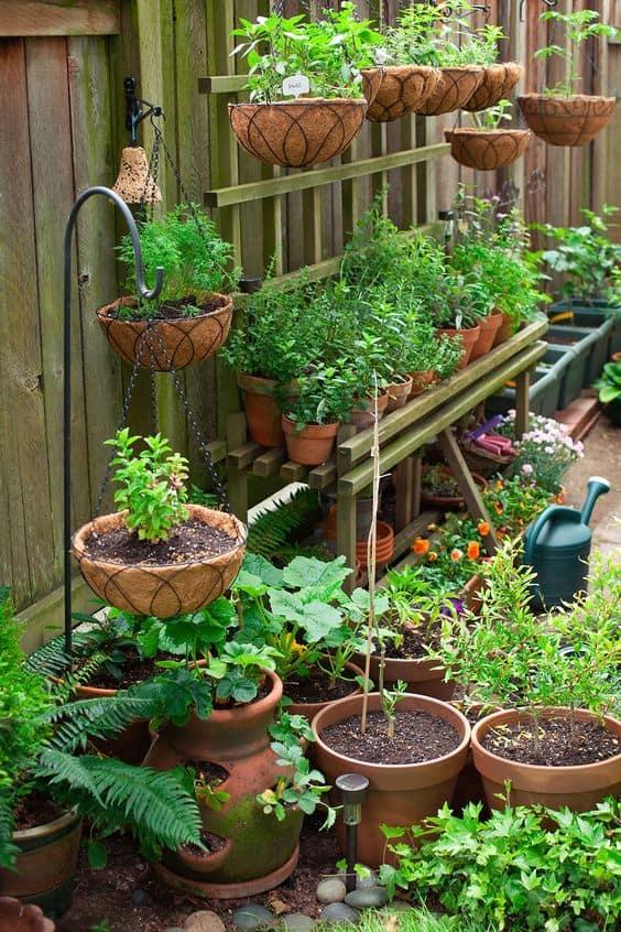 plantes pour petit jardin