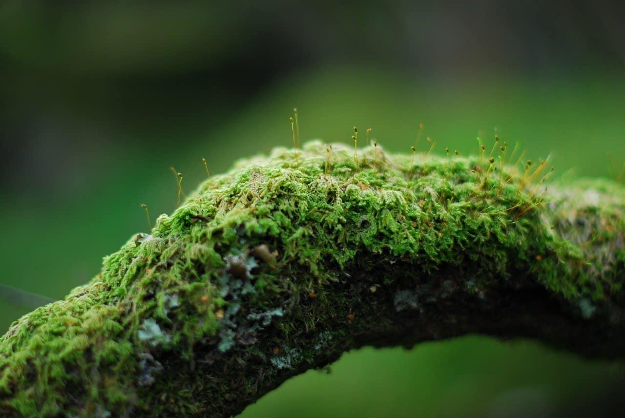mousse sur un arbre