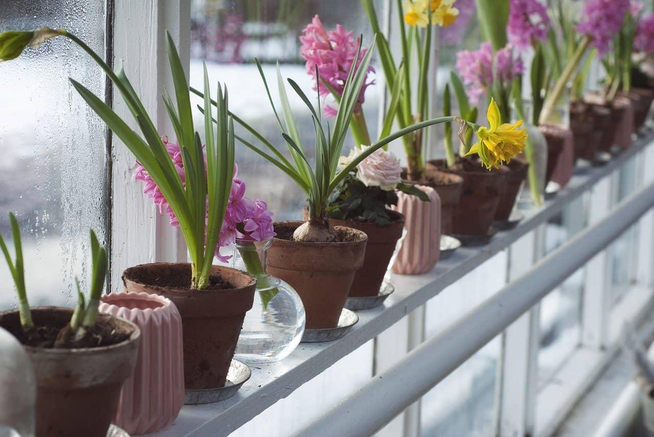 plantes pour serre