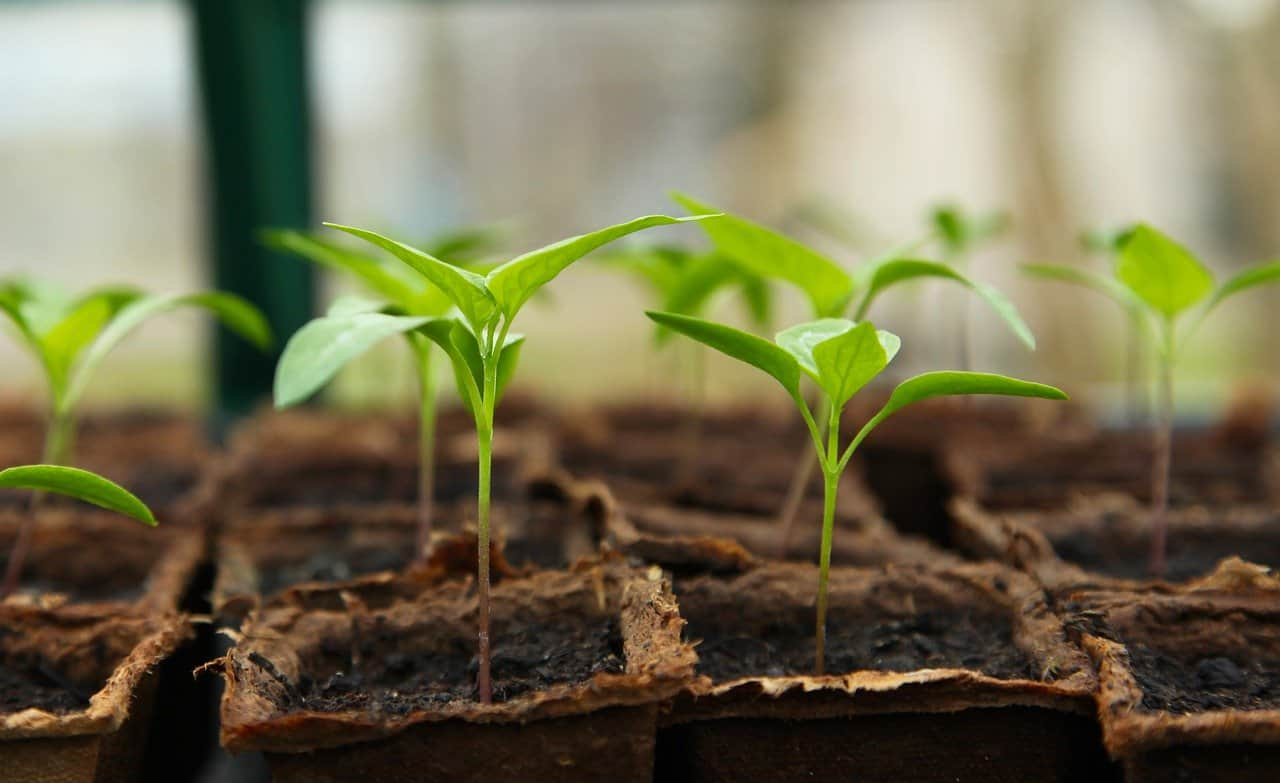 jardiner sous serre