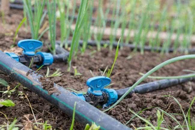 irrigation au goutte à goutte