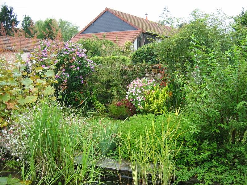 exemple de bassin de jardin avec fleur