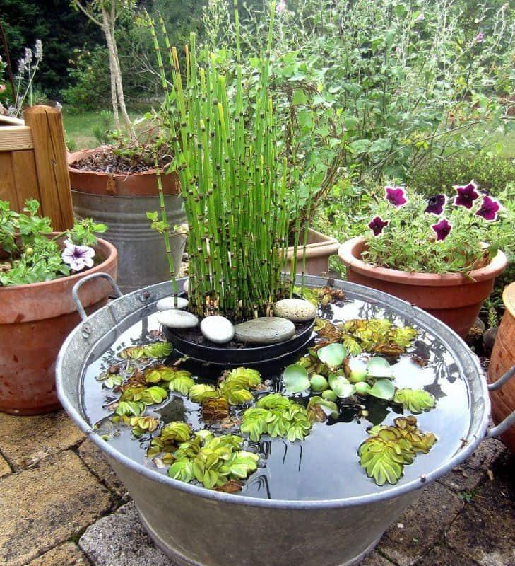 bassin de jardin pas cher