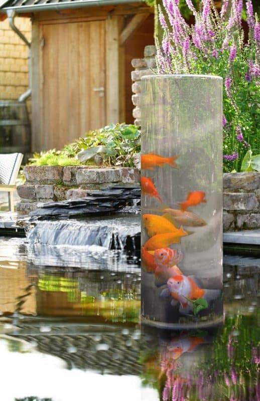bassin à poissons