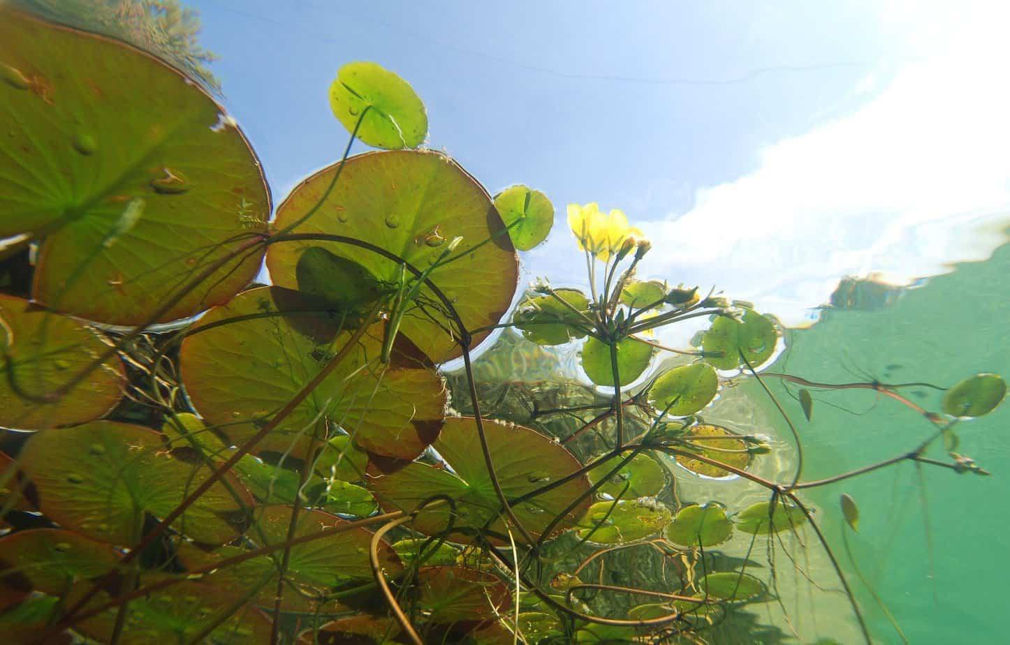 plante pour bassin de jardin